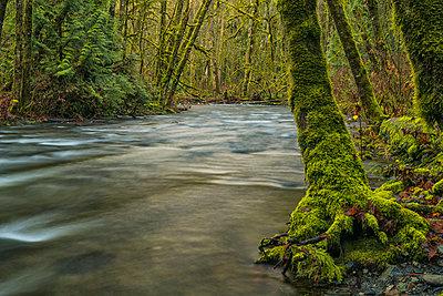 The beautiful rainforest of Goldstream Provincial Park; British Columbia, Canada - p442m1482829 by Robert Postma