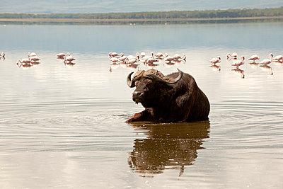 National park in Kenia - p5330301 by Böhm Monika