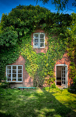 Old red brick farmhouse cottage covered in ivy  - p609m1192641 by OSKARQ