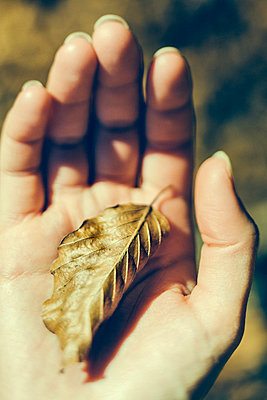 Young woman hand holding a dead leaf in autumn - p968m1028393 by Roberto Pastrovicchio
