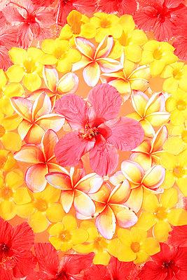 Blütendekoration - p0452615 von Jasmin Sander