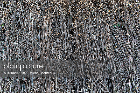 Flachs - p915m2022187 von Michel Monteaux