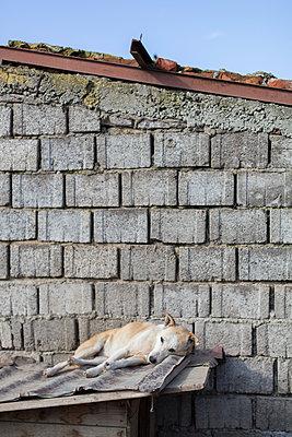 Hund im Tierheim in Rumänien - p1293m1193320 von Manuela Dörr