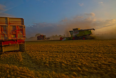 Combine harvesters at work at twilight - p1484m2289427 by Céline Nieszawer