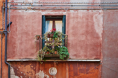 Balcony with flowers at decayed building - p1312m1575174 by Axel Killian