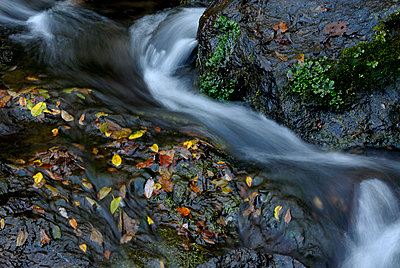 Leaves in the water - p8130119 by B.Jaubert