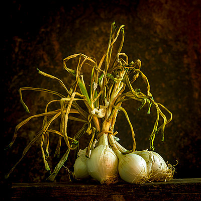 Bunch of white onions - p813m1465502 by B.Jaubert