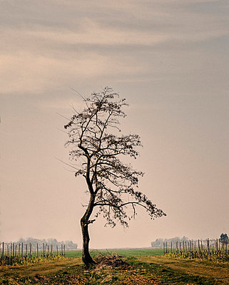 Bald tree - p1088m907772 by Martin Benner