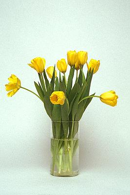 Tulpen - p2650095 von Oote Boe