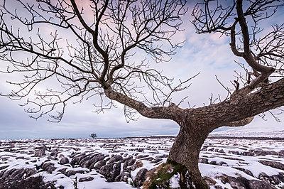 Twistleton Scar End in snow, Ingleton, Yorkshire Dales, Yorkshire, England, United Kingdom, Europe - p871m1167749 by Bill Ward