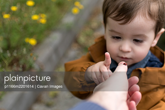 One-and-a-half-year-old boy sees a ladybird for the first time - p1166m2201614 by Cavan Images