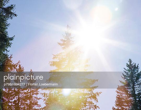 Sonnenlicht - p798m894277 von Florian Loebermann
