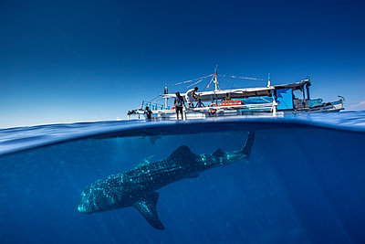Whale shark (Rhincodon typus) below a banca boat in Honda Bay, Palawan, The Philippines, Southeast Asia - p871m2122914 by Duncan Murrell