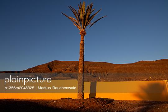 Palme auf Fuerteventura - p1356m2043325 von Markus Rauchenwald