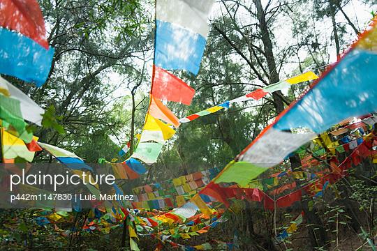 p442m1147830 von Luis Martinez