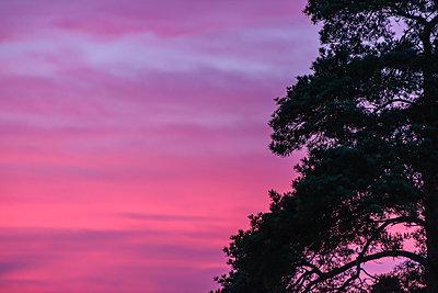 Pine sihouette and evening sky - p1418m1572172 by Jan Håkan Dahlström