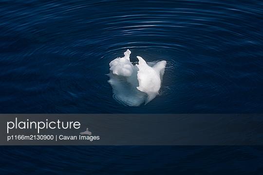 Lone iceberg - p1166m2130900 by Cavan Images
