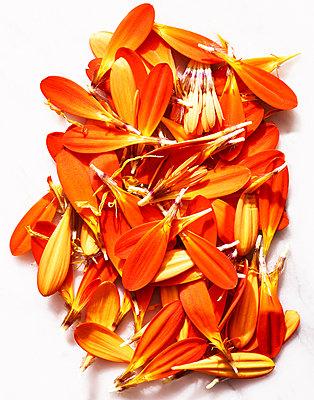 Petals - p1397m2054711 by David Prince
