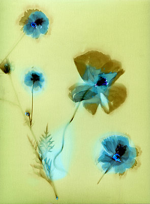 Blue flowers - p945m2163781 by aurelia frey