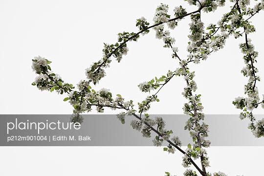 Obstblüte - p212m901004 von Edith M. Balk