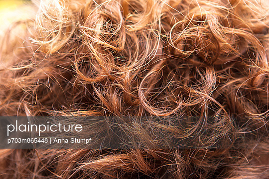 Red hair - p703m865448 by Anna Stumpf