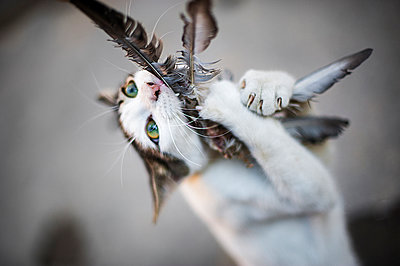 Cat catches a bird - p1007m886892 by Tilby Vattard
