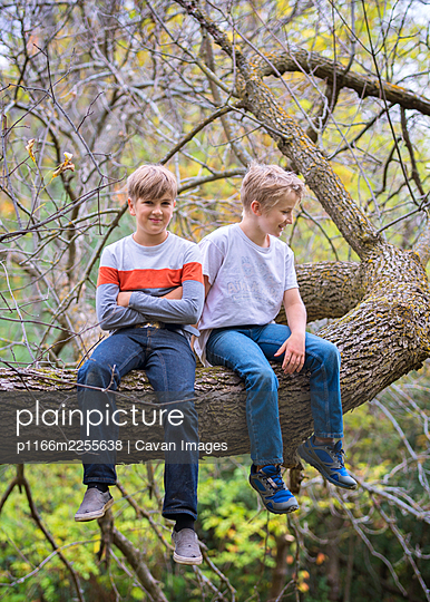 Two young boys sitting on a tree branch in the woods. - p1166m2255638 by Cavan Images