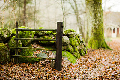 Scandinavian Peninsula, Sweden, Skåne, View of moss covered stone and fence with cottage in background - p5755502f by Peter Rutherhagen
