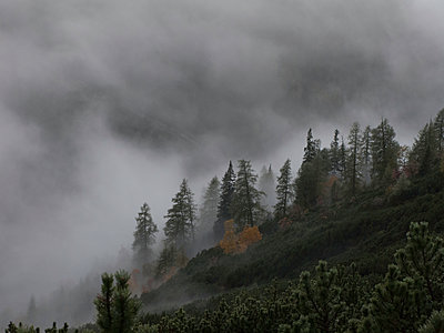 Bergwald im Nebel - p625m1092237 von A Lampe