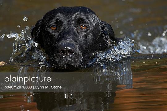 p840m2076033 von Lynn M. Stone