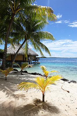 Polynesien - p045m696757 von Jasmin Sander