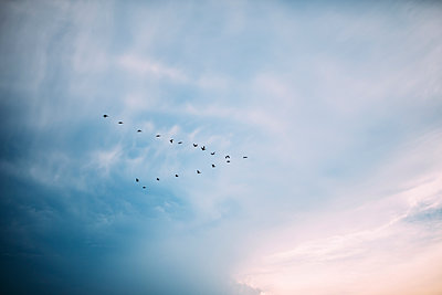 Low angle view of birds flying in sky - p1166m1174568 by Cavan Images