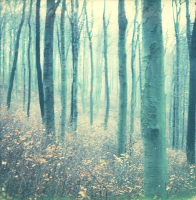 Wald - p1421m1476787 von Simon Fröhlich