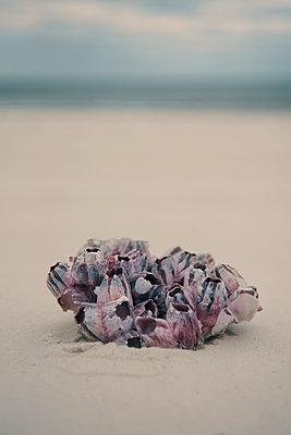 USA, Florida, Navarre, Beach flotsam - p1617m2278918 by Barb McKinney