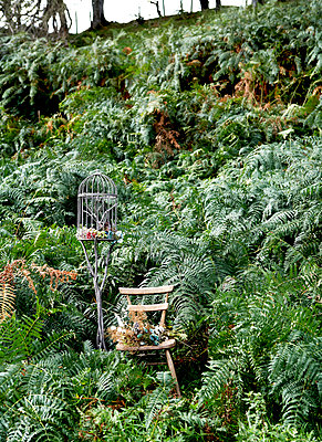 Wooden chair and bird cage in ferns on Isle of Wight hillside;  UK - p349m920037 by Rachel Whiting