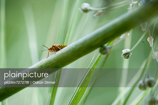 Insect on plant stem