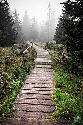 Holzweg am Brocken - p171m881010 von Rolau