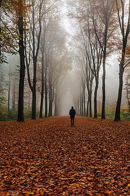 Herbstspaziergang - p305m1091377 von Dirk Morla