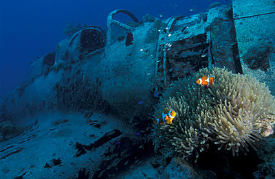 Japanese  WW II zero fighter, diver and clownfish. Underwater/Papua New Guinea. - p3435364 by Jurgen Freund