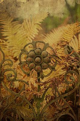 Victorian iron flower - p971m753335 by Reilika Landen