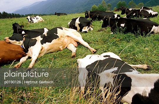 Auf der Wiese Entspannen - p0190126 von Hartmut Gerbsch