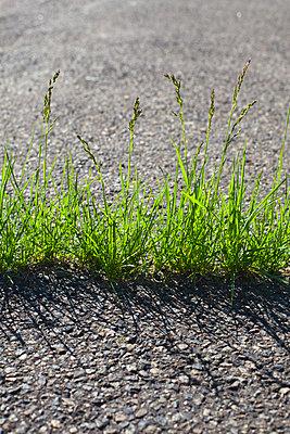 Gras wächst durch den Asphalt - p1501m2064177 von Alexander Sommer