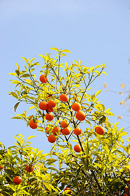 Orange - p6010221 by Alain Caste