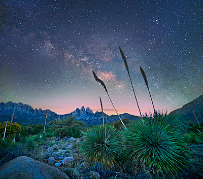 Agave group at night, Organ Mountains-Desert Peaks National Monument, New Mexico - p884m1356784 by Tim Fitzharris