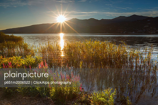 Sunset on Lake Pusiano from Bosisio Parini, Lythrum Salicaria in the foreground. Como and Lecco province, Brianza, Lombardy, Italy, Europe - p651m2006522 by ClickAlps