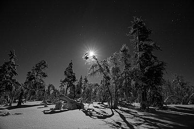 p1457m1514276 by Katrin Saalfrank