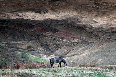 Georgische Steppe - p171m1159002 von Rolau
