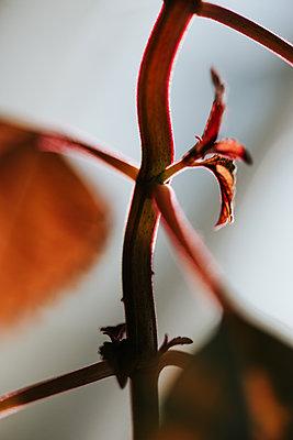 Fresh leaves of plant, close-up - p1507m2177600 by Emma Grann