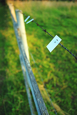 Yes at a fence - p2682492 by Robert Pola