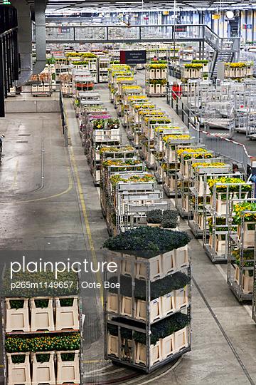 Blumengroßmarkt - p265m1149657 von Oote Boe